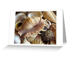 Shells 5 Greeting Card