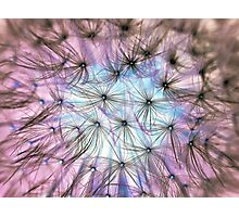 Dandelion Fluff Cloud Photographic Print