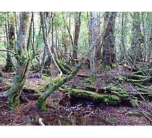 Moss Grows Photographic Print