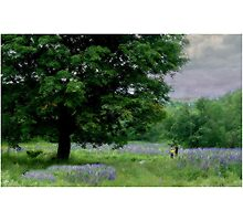 A Childs Walk Among Lupine Photographic Print