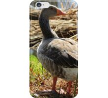 Wild Goose With Turned Head iPhone Case/Skin