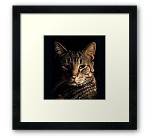 The Cat Who Would be King Framed Print