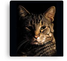 The Cat Who Would be King Canvas Print