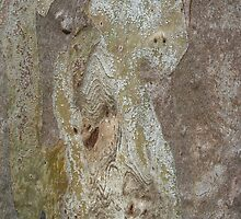 Faces In The Bark! by Kay Cunningham