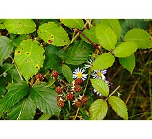 Bramble Patch Photographic Print