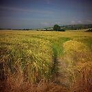 Summer fields by Inese