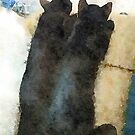 New Kittie Duo by vanhagen