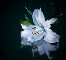 Flower in Water by Colin Shanley