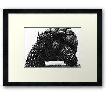 A Tortoise Framed Print