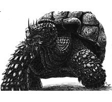 A Tortoise Photographic Print
