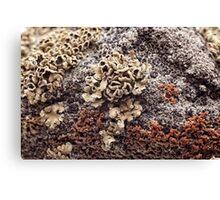 New Mexico Lichen on Desert Rock #1 Canvas Print