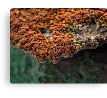 Macro of New Mexico Lichen on Desert Rock #2 Canvas Print