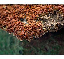 Macro of New Mexico Lichen on Desert Rock #2 Photographic Print