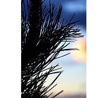 Plant Sunset Silhouette #2 Photographic Print