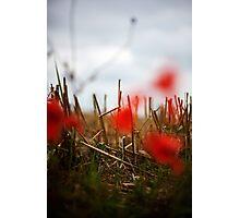 SL-WEEK 26: DOF Photographic Print
