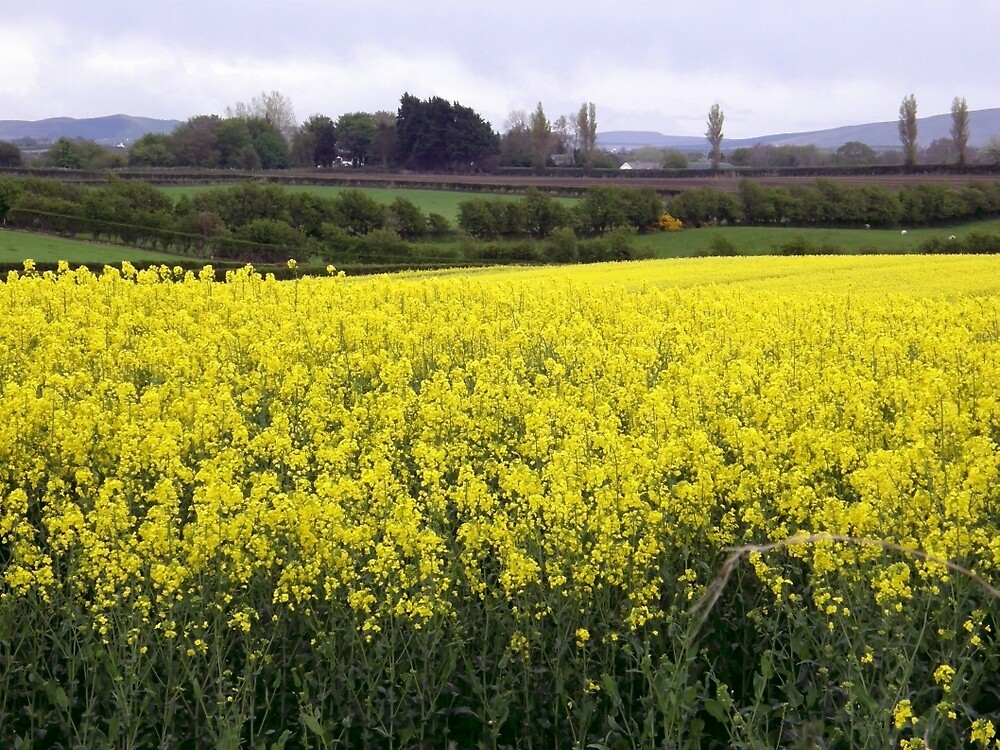 Yellow dance of Nature - Limavady County Derry Ireland by mikequigley