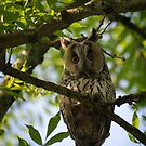Whooo.. are you? by Javimage