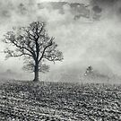 The tree in the field by Jeff  Wilson