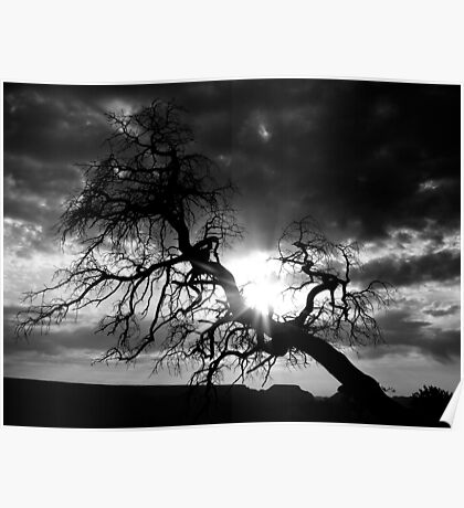 But Soft What Light Through Yonder Tree Breaks? Poster
