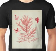 The botany of the Antarctic voyage of H M  discovery ships Erebus and Terror in the Years 1839 1843 Joseph Dalton Hooker V1 064 Unisex T-Shirt