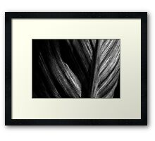 Leaf in Black & White Framed Print