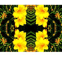 Yellow Blossoms in the Park Photographic Print