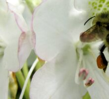 Pollen Packing Bumble Bee Sticker