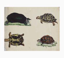 Naturgeschichte in Bildern mit erläuterndem Text E Strack 1820 Lief 3 Reptiles 003 One Piece - Long Sleeve