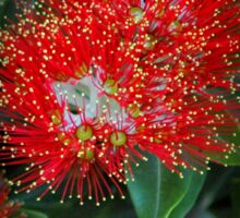 red flowering gum Sticker