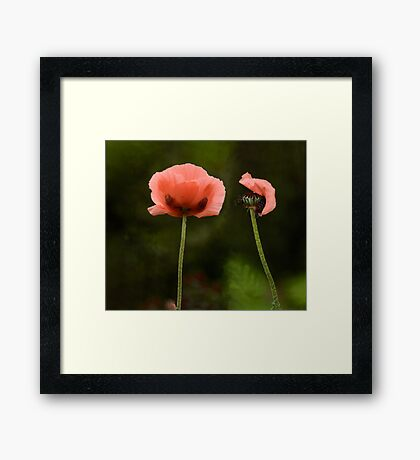 Couple Pink Oriental Poppies  Framed Print