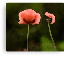 Couple Pink Oriental Poppies  Canvas Print