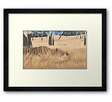 Thylacoleo carnifex - marsupial lion Framed Print
