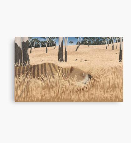 Thylacoleo carnifex - marsupial lion Canvas Print