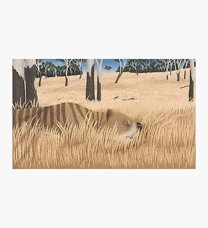 Thylacoleo carnifex - marsupial lion Photographic Print