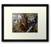 Huge New Claws Framed Print