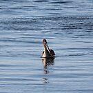 Gliding into Harbor by Bob Hardy