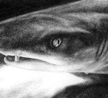 Sarcastic Shark by LisaBuchfink