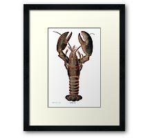 The Vintage Lobster Framed Print