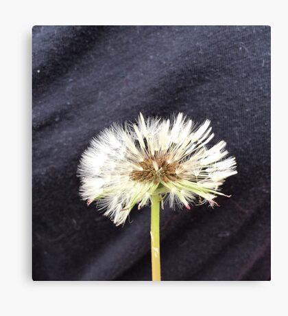 Wet Dandelion Fluff Canvas Print
