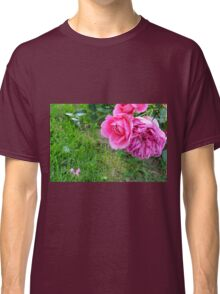 Pink roses in the garden. Classic T-Shirt
