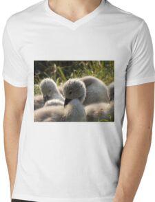 Beautiful Cygnets  Mens V-Neck T-Shirt