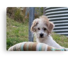 Poppy the puppy Canvas Print