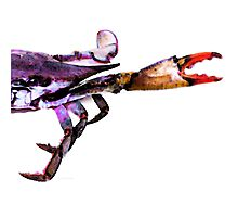 Half Crab - The Right Side Photographic Print