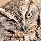 A wink from a Screech Owl by Jeff Ore
