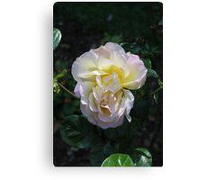 Pale rose. Canvas Print