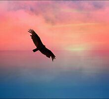 Soaring in the Sunset by Darlene Lankford Honeycutt
