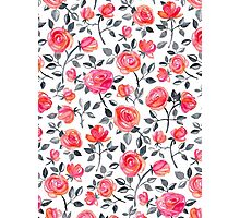 Roses on White - a watercolor floral pattern Photographic Print
