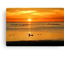 Black swans at sunset Canvas Print