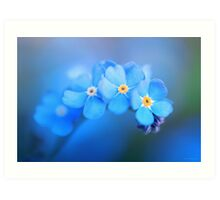 Forget me not... Art Print