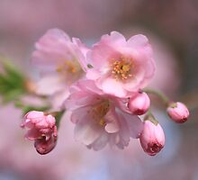 Pink Explosion by Ursula Rodgers